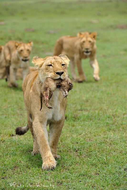 Charm et son lionceau
