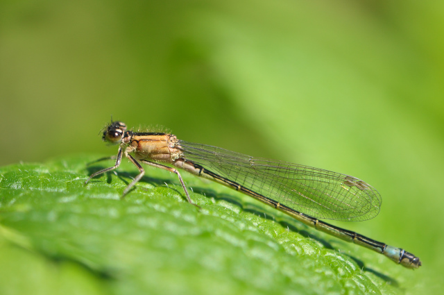 AGRION 025