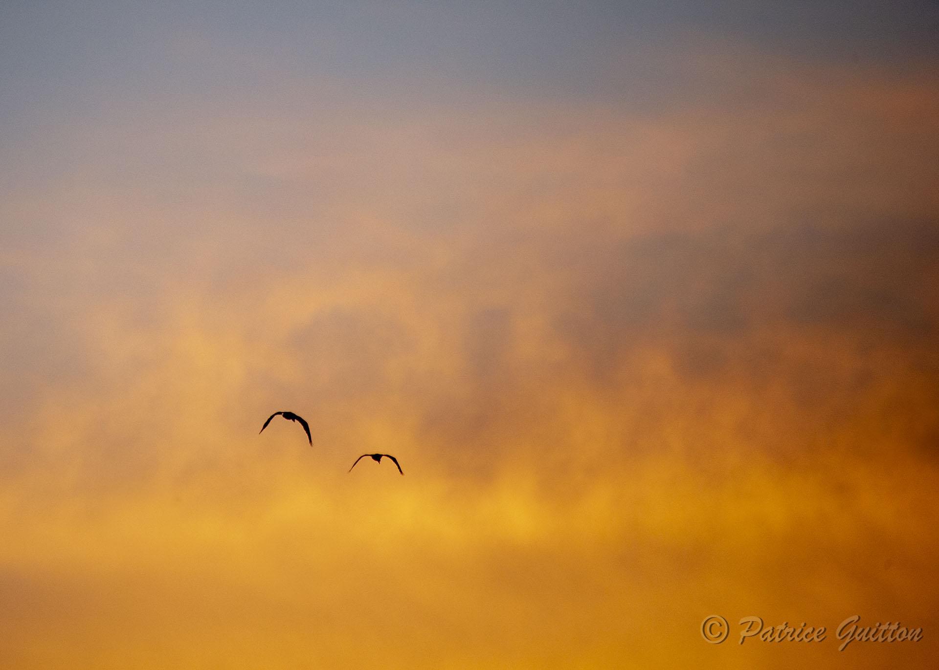 coucher soleil pantanal