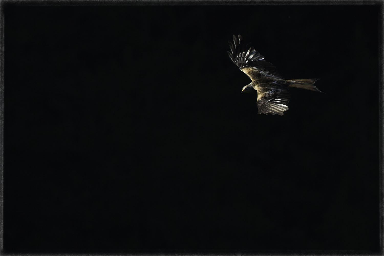 Vol au dessus des gorges