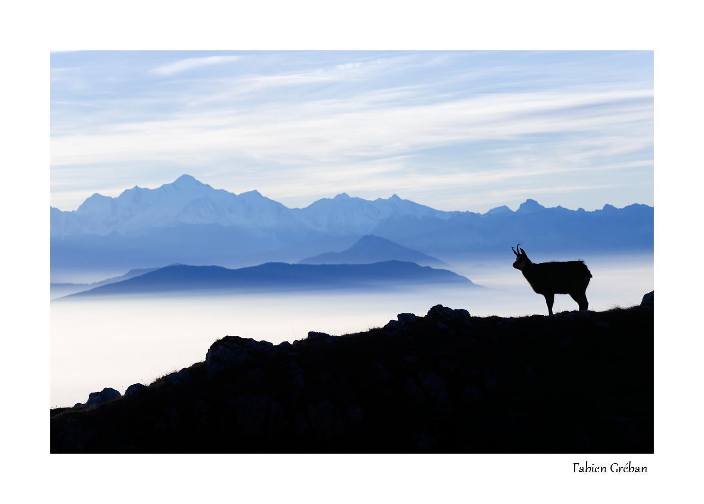 le chamois et le mont blanc